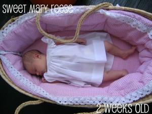 mr 2 weeks old
